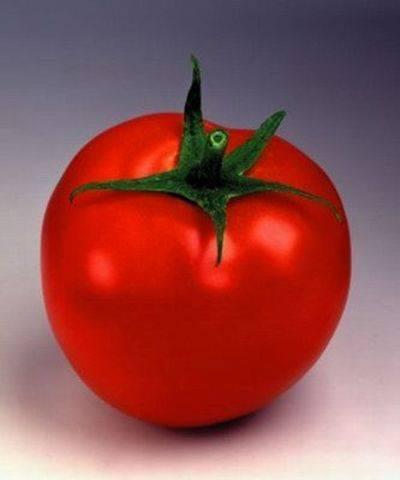 Крепкие, устойчивые кусты для открытого грунта — томат «татьяна»: чем хорош и как его выращивать правильно