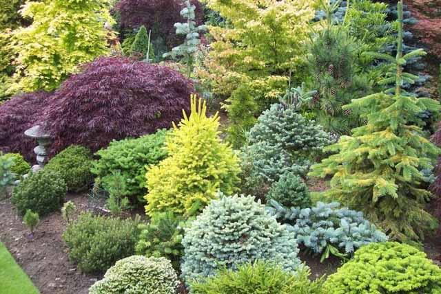 Хвойные породы деревьев: список, описание,