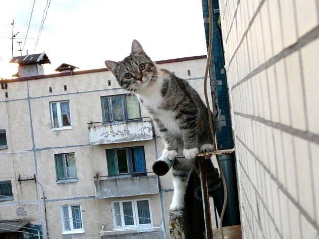 Незваные гости. самые эффективные способы, как избавиться от голубей на балконе