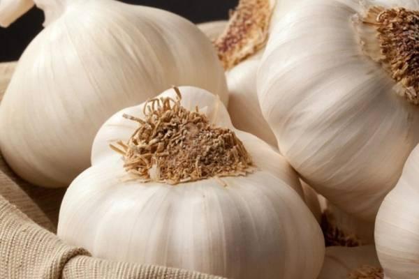 Сорта чеснока: описание лучших яровых и озимых сортов