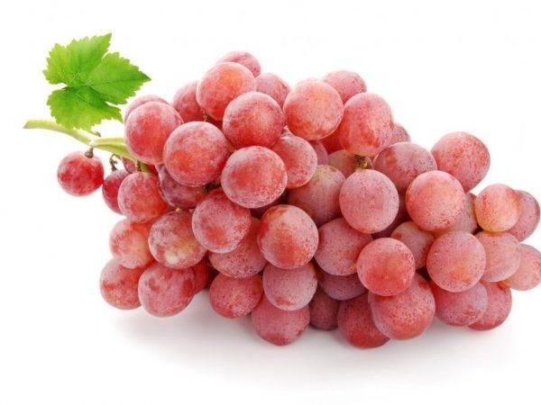 Виноград дубовский розовый: описание сорта, фото, отзывы, видео, уход