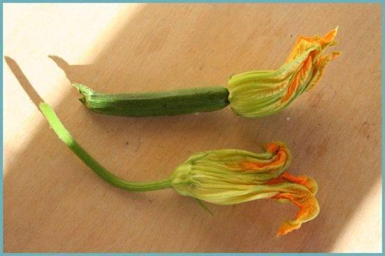 Пустоцветы на кабачках — причины проблемы и способы ее устранения