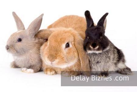 Бизнес-план по разведению кроликов — пример с расчетами