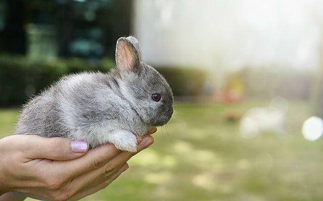 Кусаются ли кролики домашние. кусаются ли декоративные кролики и почему. варианты реагирования на агрессию, в зависимости от ее предпосылок