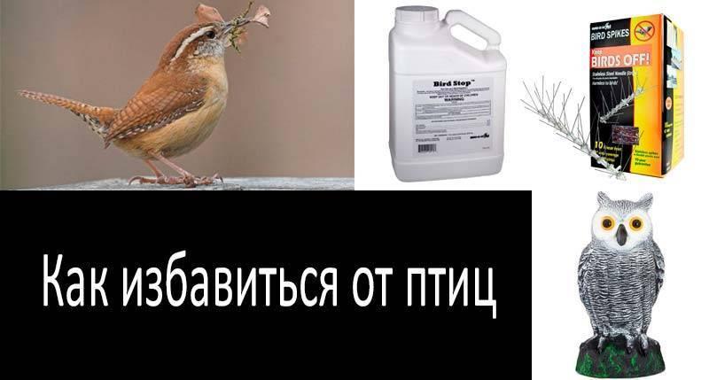 Чем отравить голубей во дворе или на балконе: яд своими руками