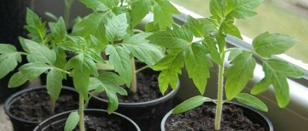 Описание томата лимеренс — как поднять урожайность
