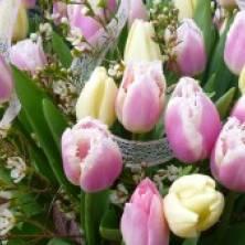 Как сохранить срезанные тюльпаны дольше