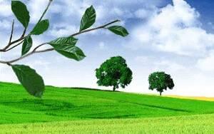 Защита тепличных растений от болезней и вредителей