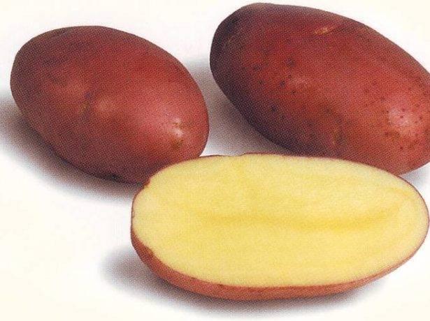 Лучшие сорта картофеля для сибири |