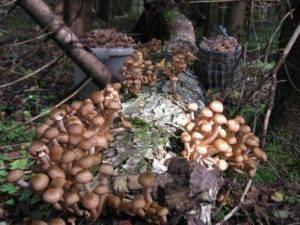 Грибы калининградской области 2020: когда и где собирать, сезоны и грибные места