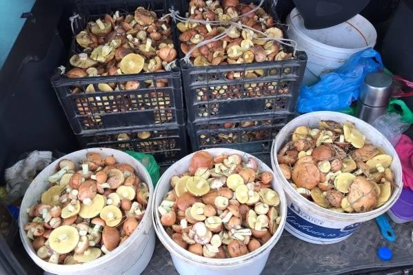 Календарь грибника – когда какие грибы собирать