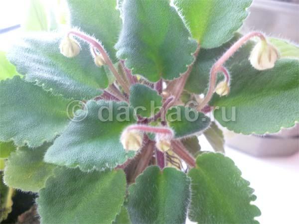 Касторовое масло для цветов (10 фото): как использовать подкормку? применение в качестве удобрения для растений. как поливать орхидею? отзывы