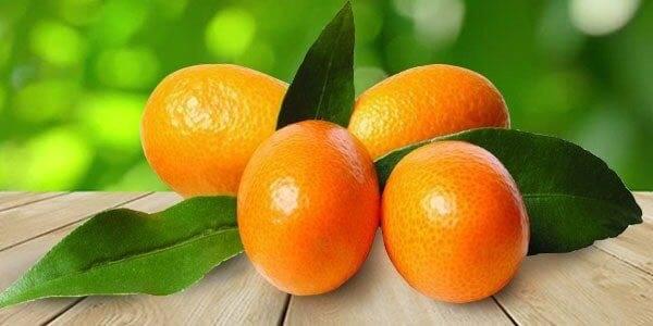 Цитрусовые фрукты список названий и фото
