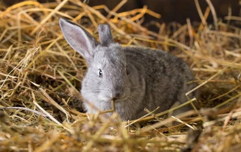 Роды крольчихи и уход в домашних условиях