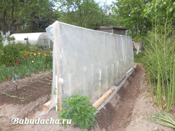 Как правильно подвязывать высокорослые томаты (помидоры) в открытом грунте