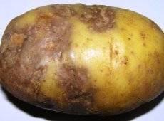 Россельхознадзор / основные болезни и вредители картофеля