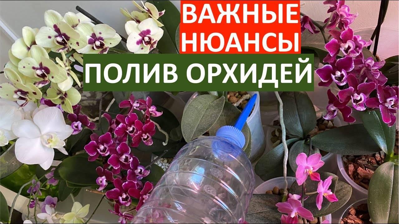 Когда можно пересаживать орхидею, когда она цветет: нюансы процедуры от профессионалов
