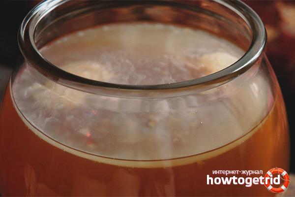 Как в домашних условиях вырастить чайный гриб с нуля: рецепт, инструкция