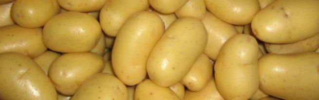 Какой сорт картофеля самый вкусный: топ-25 сортов с характеристикой