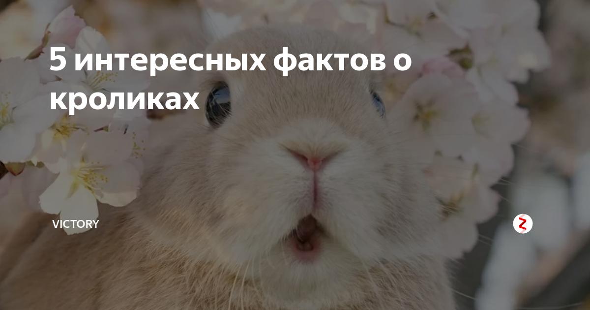 Интересные факты о домашних кроликах. интересные факты о кроликах. | интересные факты
