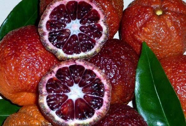 Сорта мандаринов: названия и описание основных видов