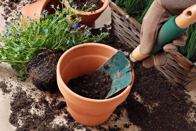 Как сделать почву кислой для растений