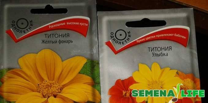 Титония: фото цветка, посадка и уход в открытом грунте