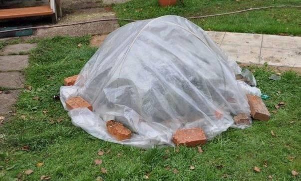 Подготовка гортензии к зиме: как правильно обрезать и укрывать на зиму