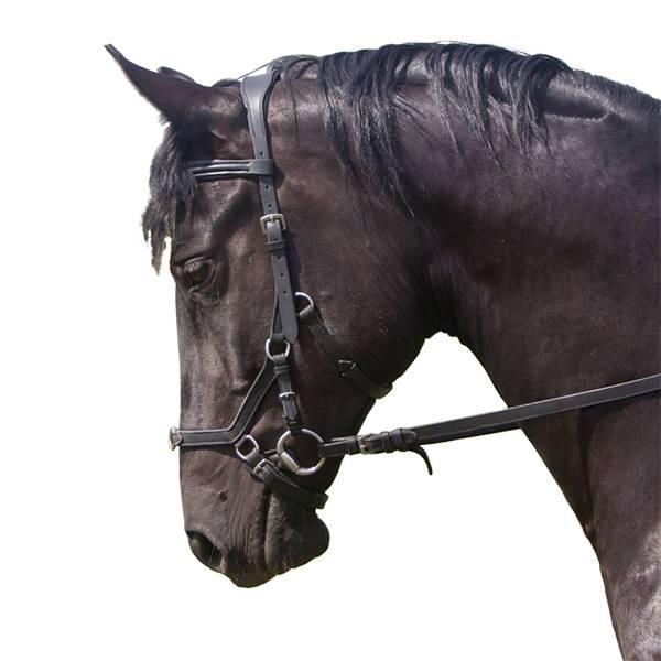 Уздечка для лошади — разбираемся развернуто
