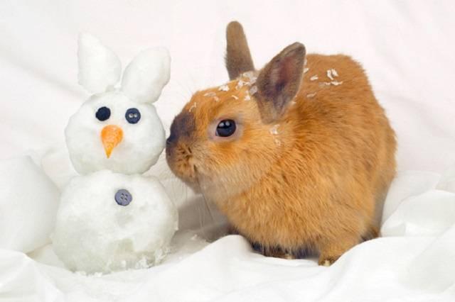 Любимые ушастики: как разводить, содержать и уберечь кроликов от болезней