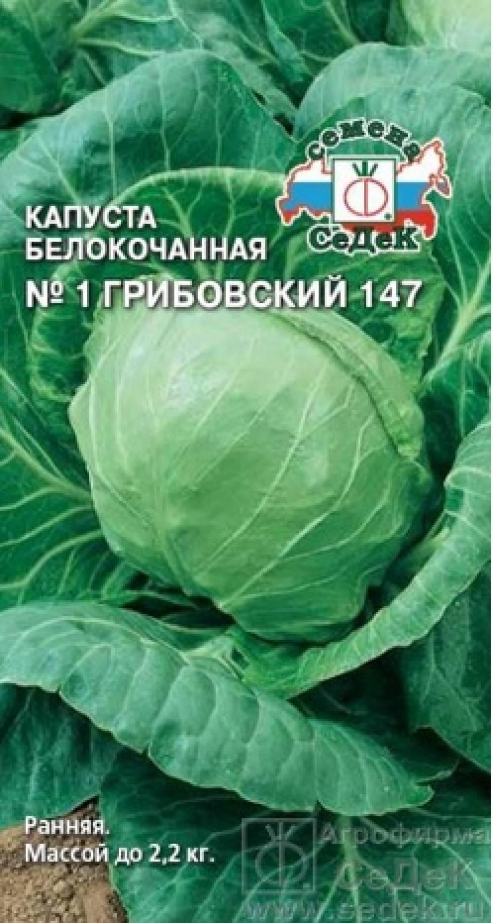 Капуста грибовская 147: отзывы - сельская жизнь