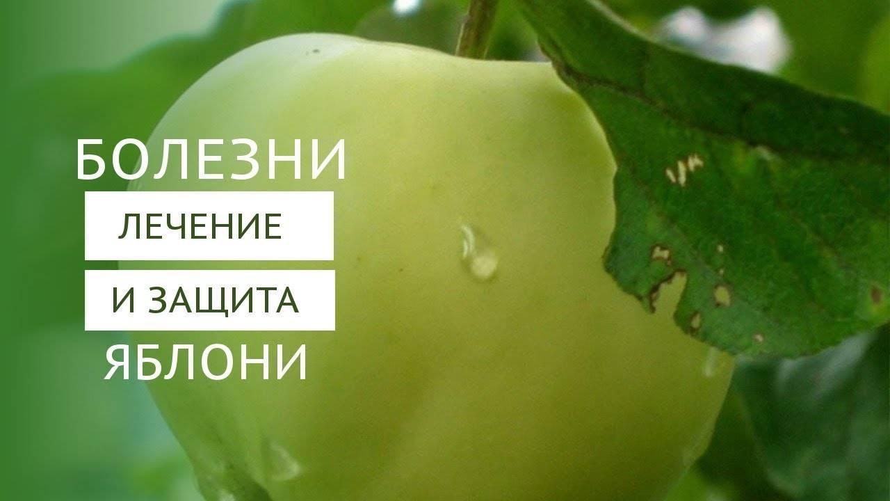 Болезни и вредители яблонь с фото и их лечение