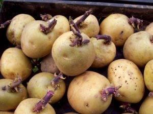 Картофель каратоп: характеристика и описание сорта, фото, отзывы