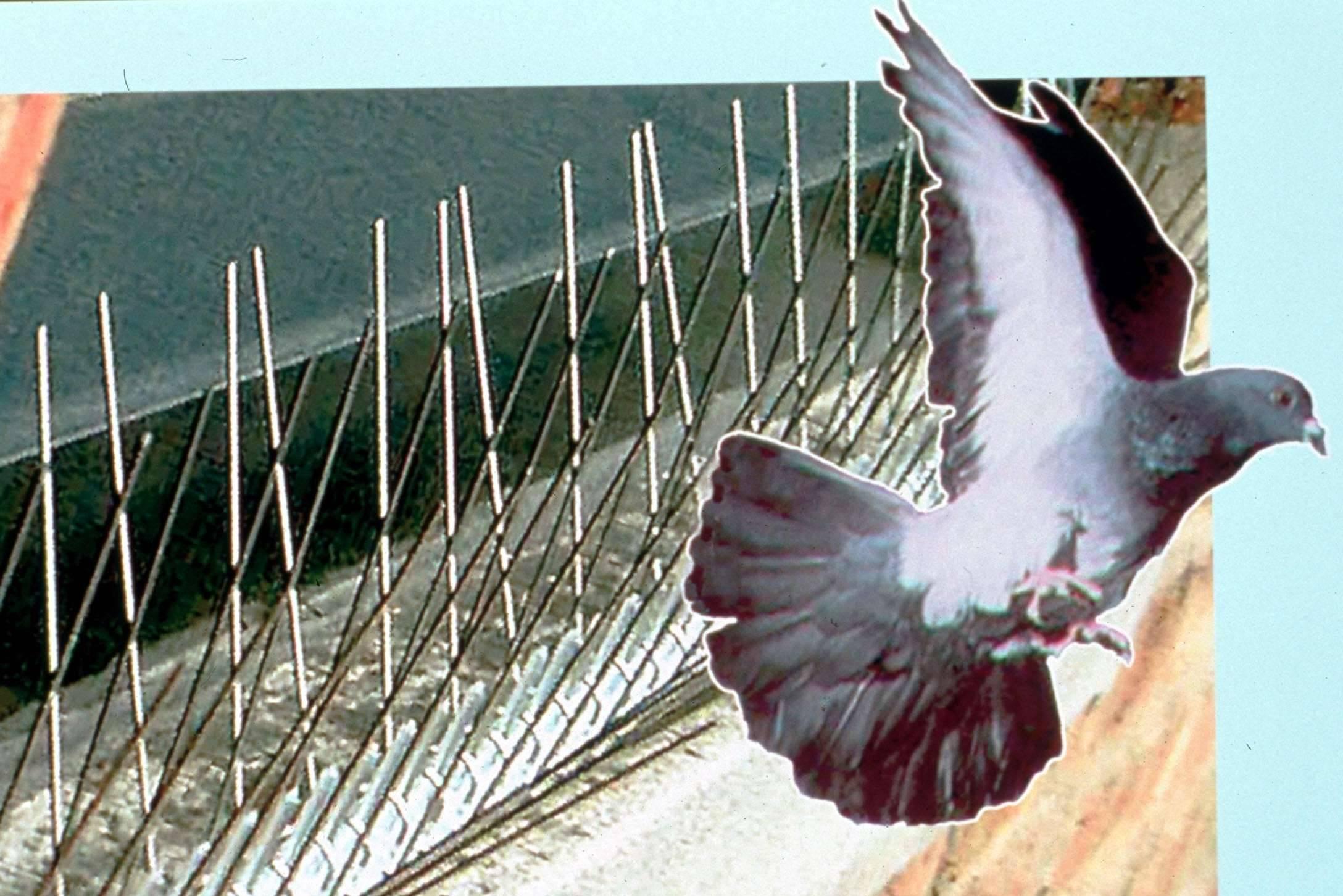 Как избавиться от голубей и их гнезд на балконе?