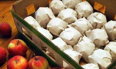 Как и при какой температуре хранить яблоки зимой