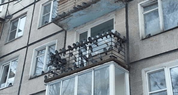 Как избавиться от голубей на балконе, подоконнике, чердаке: советы, видео