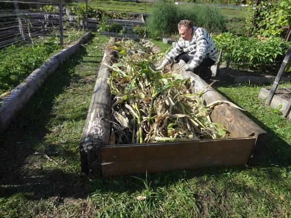 Узкие грядки. секрет удивительного урожая игоря лядова