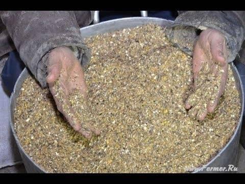 Как приготовить мешанку для кур несушек - рецепт для летней и зимней мешанки