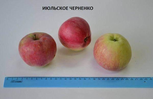 Яблоня июльское черненко — описание сорта, фото, отзывы