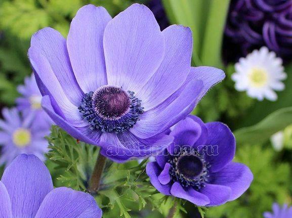 Растения для альпийских горок многолетние: названия декоративных кустарников, цветов