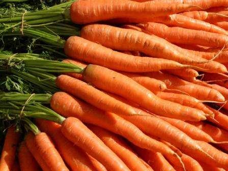 Лучшие сорта моркови для хранения на зиму - обзор и отзывы