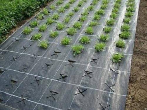 Когда и как пересадить клубнику (землянику) летом, осенью, весной на другое место, как подготовить грядку под клубнику