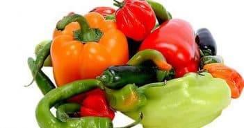Температурный режим для рассады перца: что нужно знать овощеводу