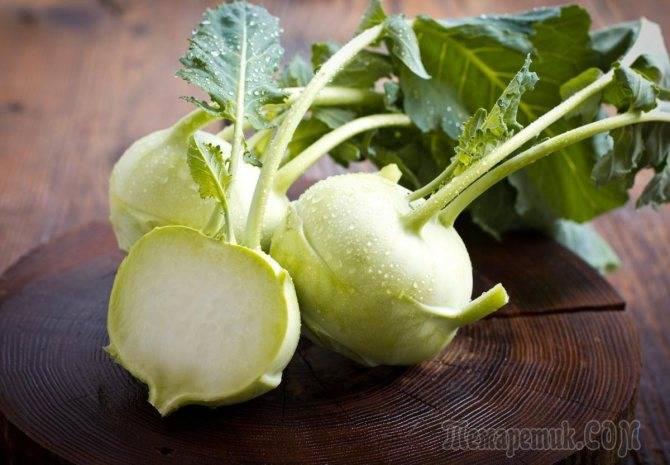 Выращивание кольраби | вырасти сад!