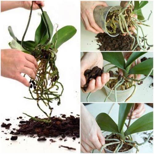 Грунт для орхидей (26 фото): какой субстрат нужен для орхидей? описание почвы «цеофлора» и других. состав грунта. как сделать его в домашних условиях?