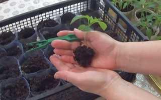 Прищипывание переца — залог обильного плодоношения