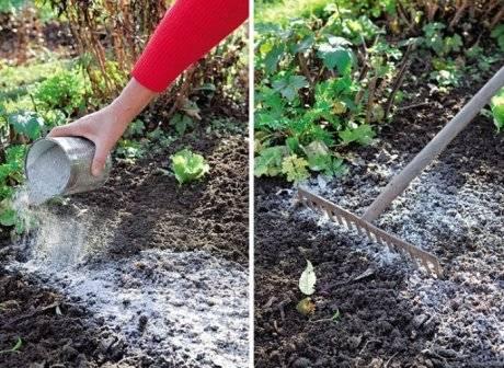Применение на огороде древесной золы: польза и вред