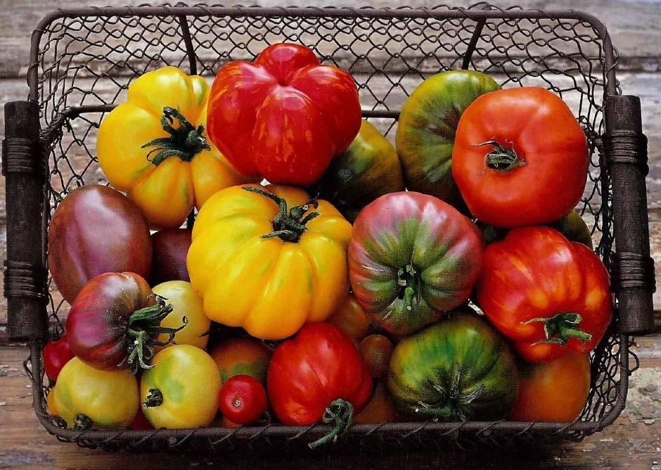 Что делать, если помидоры в теплице цветут, но не завязываются?