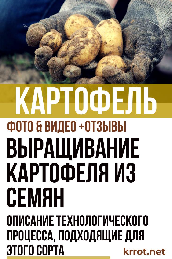 Посадка картофеля семенами и глазками на рассаду в домашних условиях, видео