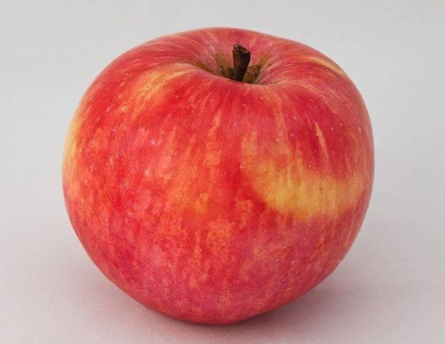 Описание и посадка яблони услада